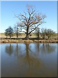 SO8843 : Oak tree reflected in Croome River by Philip Halling