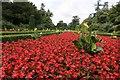 SU9185 : Cliveden Begonias by Bill Nicholls