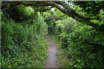 SX4851 : South West Coastal Path, Rams Cliff by N Chadwick