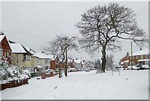 SO9096 : Buckingham Road in Penn, Wolverhampton by Roger  Kidd