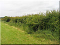 NZ2925 : Stretch of hedge with embedded trig point by Trevor Littlewood
