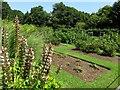 SZ5294 : Gardens by the Swiss Cottage by Steve Daniels