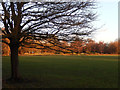 TQ2972 : Tooting Common by Stephen McKay