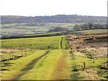 SE1767 : Track across the moor by Gordon Hatton