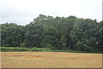 TQ3128 : Woodland by Borde Hill Lane by N Chadwick