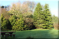 NS2309 : Woodland at Culzean by Billy McCrorie