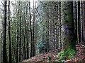 SN7377 : In Coed Rheidol National Nature Reserve : Week 51