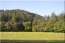 SX1061 : Fowey Valley by N Chadwick