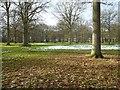 SO7943 : Langdale Wood by Philip Halling