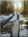 SO7942 : Snowy woodland track by Philip Halling