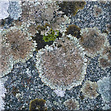 NH7544 : Lichen on a Clava Cairn by Julian Paren