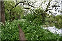 TQ3785 : Riparian path beside River Lea (or Lee) by David Kemp