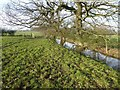 SP0476 : Water filled ditch by Philip Halling