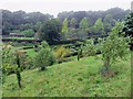 SZ4083 : The Olive Grove at Mottistone Manor by Steve Daniels
