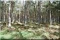 NJ8117 : Balbithan Wood by Richard Webb
