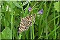 TQ8019 : Mother Shipton moth in Pond Wood, Brede High Woods by Patrick Roper