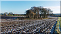 NH6354 : Copse and farmhouse of Balnakyle, Black Isle by Julian Paren