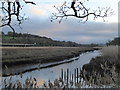 SX8772 : Water course between the Old Channel and the River Teign by Chris Allen