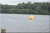 TQ3329 : Openwater swimmers, Ardingly Reservoir by N Chadwick