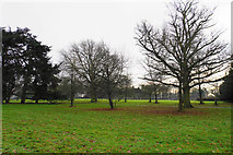 SK1400 : Parkland by Canwell Hall by Bill Boaden