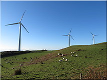 SS9985 : Windfarm and sheep farming near the Taff Ely Ridgeway walk by Gareth James
