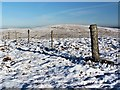 NS2762 : Fence on the summit of West Girt Hill by Raibeart MacAoidh