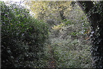 TQ2569 : Overgrown footpath by N Chadwick