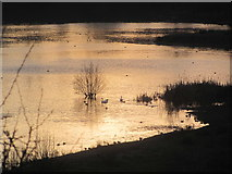 SP9314 : Winter Sunlight on the Marsh at College Lake by Chris Reynolds