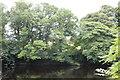 NZ0615 : Tree lined river by Bob Harvey