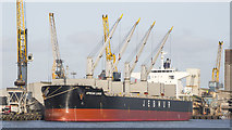 J3576 : The 'African Lunde' at Belfast by Rossographer