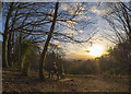 J4772 : Sunset, Killynether Wood by Rossographer