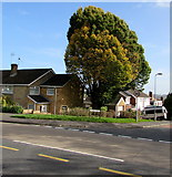 ST3091 : October colours on a Malpas corner, Newport by Jaggery