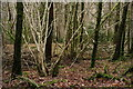 NY1404 : Hazel Coppicing by Peter Trimming