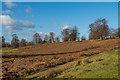 TQ5454 : Knole Park by Ian Capper
