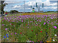 NZ5134 : Flowers next to West View Road in Hartlepool by Mat Fascione