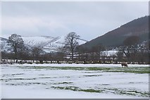 NT2538 : Snow thawing in fields at Haystoun by Jim Barton