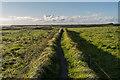 SW7012 : Footpath to Kynance by Ian Capper
