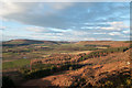 NZ5906 : Coniferous plantations below heather slope by Trevor Littlewood