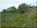 SN7159 : Hill pasture in Cwm Berwyn, Ceredigion by Roger  Kidd
