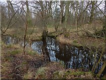 NS3882 : Ditch around old castle earthworks by Lairich Rig