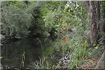 TQ2865 : River Wandle by N Chadwick