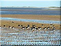 TF7545 : Oystercatchers  on Titchwell beach in Norfolk by Richard Humphrey