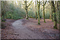 SO9974 : Bridleway through Lickey Hills Country Park by Stephen McKay