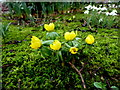 H4572 : Spring flowers, Omagh (1) by Kenneth  Allen