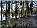 SD7314 : Wooded Shore at Jumbles Reservoir by David Dixon