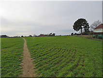 TM2844 : Waldringfield: path to Mill Road by John Sutton