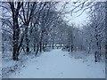 NS3978 : Strathleven Walk by Lairich Rig