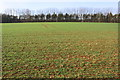 SP5119 : View across field towards Long Plantation by Roger Templeman