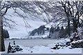 NT2550 : Winter trees, Portmore Loch : Week 5