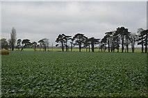 TL5048 : Crops by N Chadwick